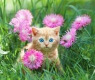 actuar fiebre gatos