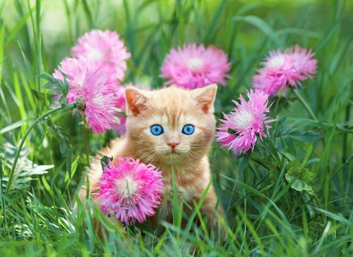 Cómo actuar ante la fiebre de los gatos