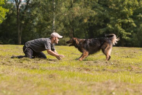 Persona adiestrando a un perro