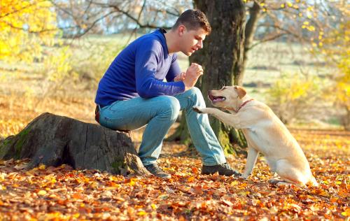 Adiestramiento canino: los 6 mejores trucos para perros