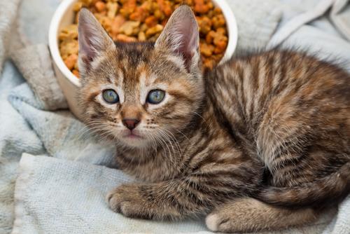 adoptar gato 2