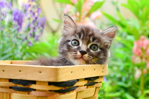 Consejos a la hora de adoptar un gato
