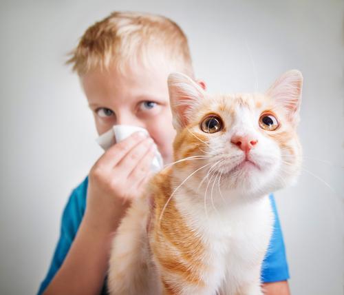 alergias mascote