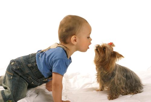alergias mascotas 3