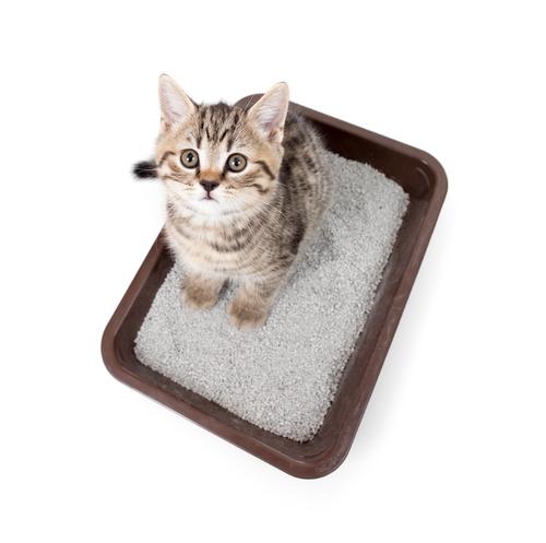 arena para gatos 2