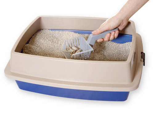 Person cleaning out a litter box