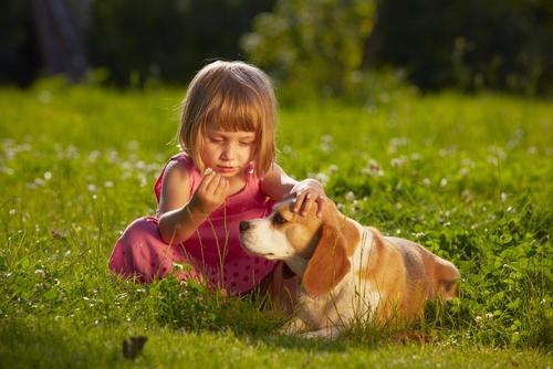 beagle con niño