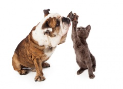 compañero para tu gato