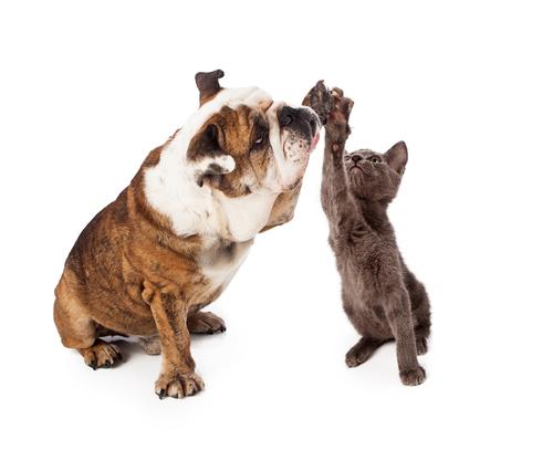 Un compañero para tu gato, ¿una buena idea?