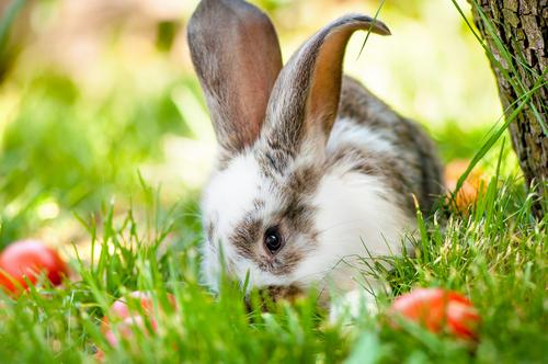 Cuidando de um coelho