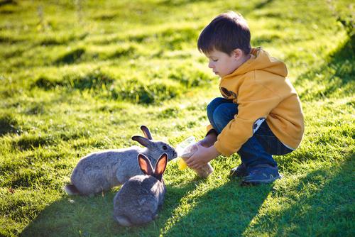 curiosidades de los conejos 3