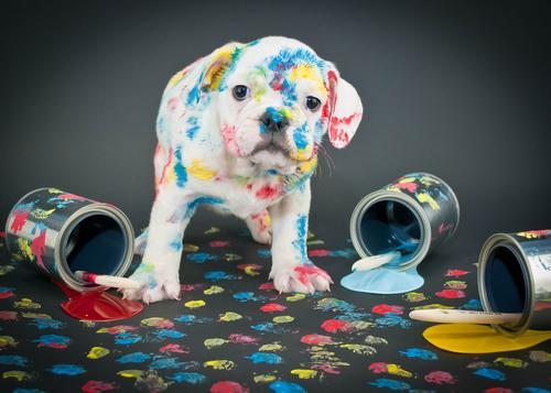6 razones por las cuales educar a tu perro correctamente