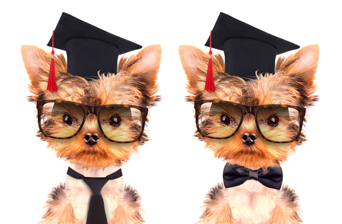 3 secretos para educar a un cachorro