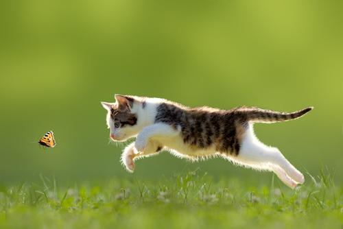 educar gato 2