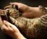 educar gato