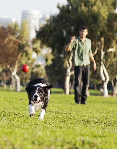 Treinamento cachorro