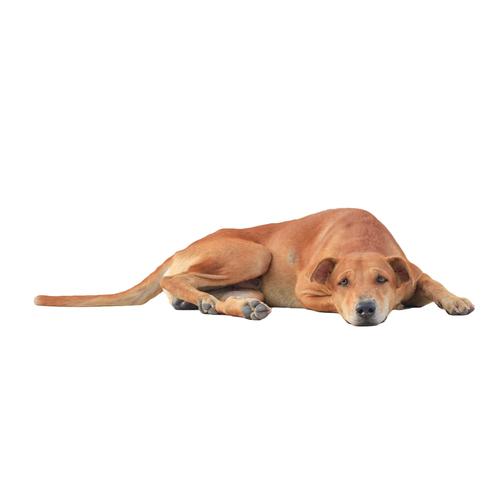 como quitar estreñimiento en perros