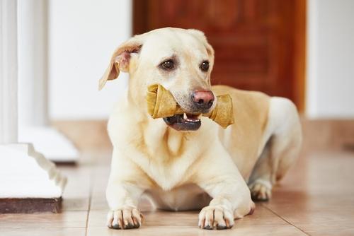 fisiologia canina 3
