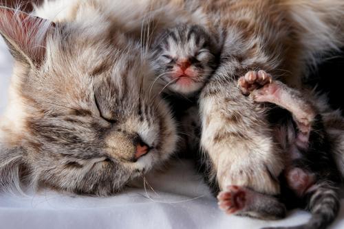 El destete en gatos