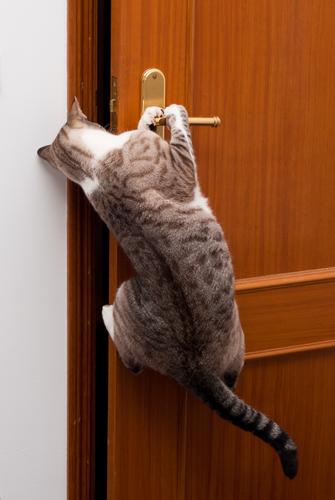 gato abre la puerta