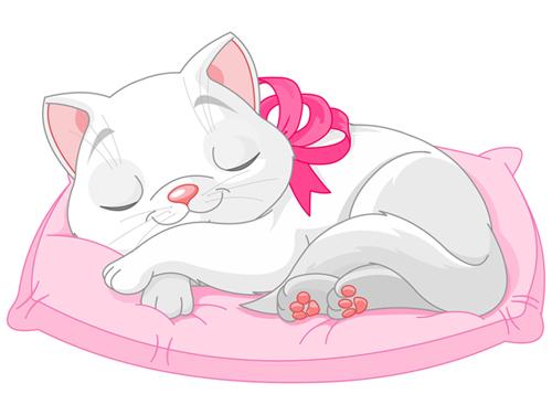 gato con cojin