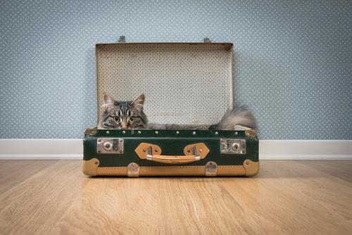 gato en una maleta