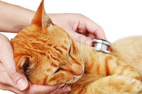 Tumores cutáneos en gatos