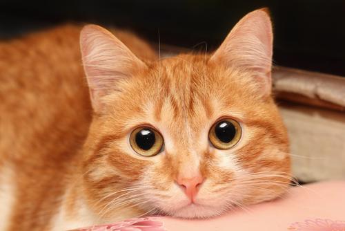 Fotos de animales de todo tipo incluyendo mascotas que más te gustan Gato-enfermo