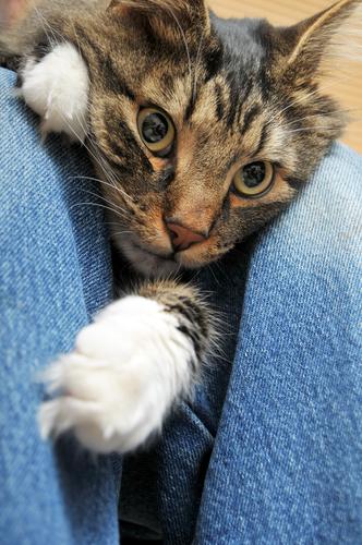 gato estresado 2