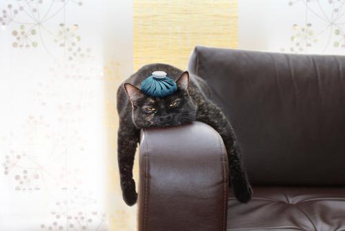 Descubre las causas del estrés en los gatos