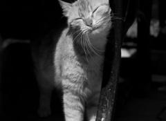 gato frota la cabeza