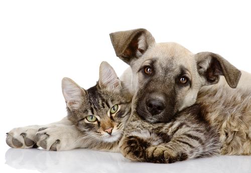 gatos en casa 2