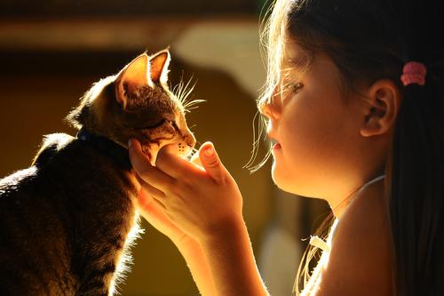gatos en casa 3