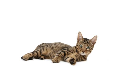 gatos raros 2