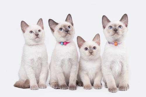Tipos de arena para gatos: aprende a elegir la más adecuada