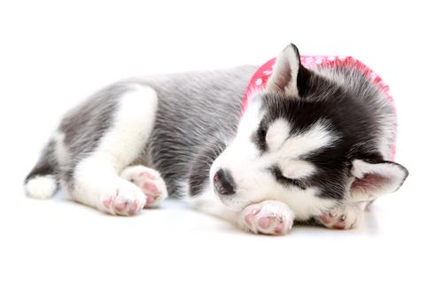 Consejos para hacer dormir a un perro