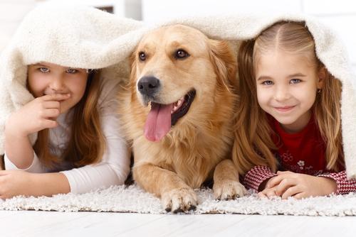 labrador con niños