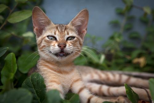 lenguaje de los gatos 3