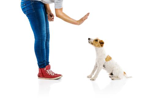 mal comportamiento perro 2
