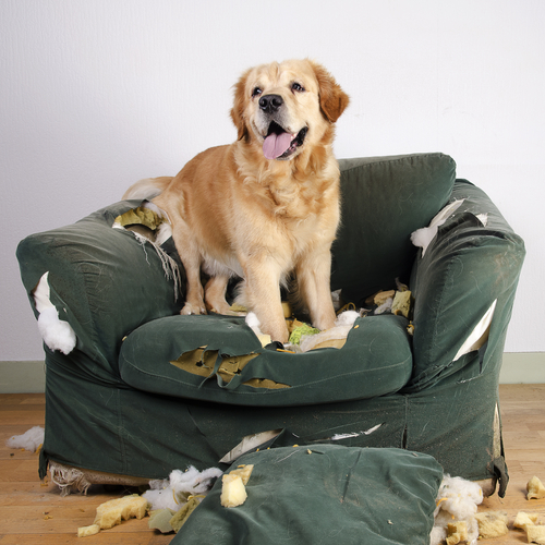 El estrés en los animales: un mal muy común