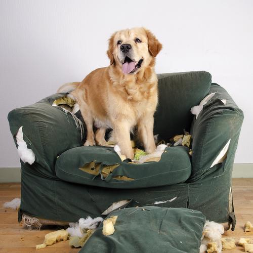 Los secretos para mejorar el comportamiento del perro