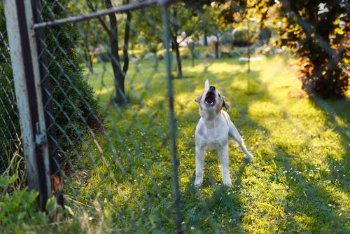mascotas ante el ruido