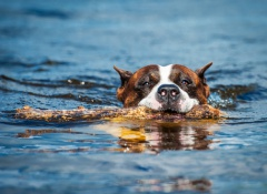 miedo al agua