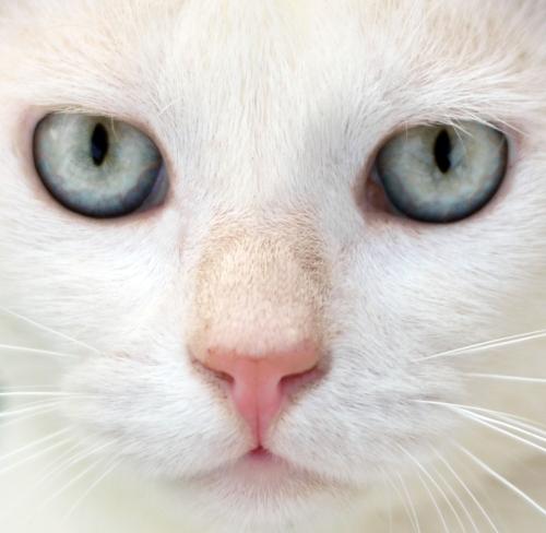 Mitos y verdades sobre los gatos