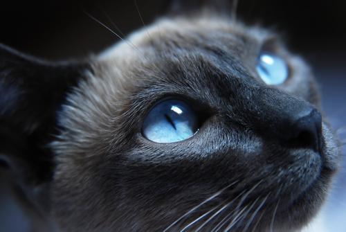 ojos de tu gato 2