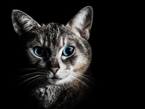 Simples consejos para cuidar los ojos de tu gato