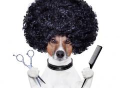 peluqueria para perros