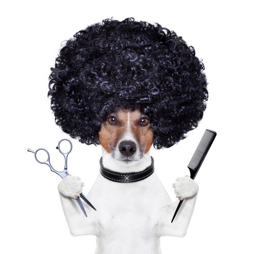 ¿Vas a llevar a tu perro a la peluquería canina y tienes muchas dudas? Aquí te las resolvemos.