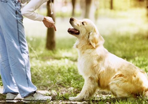 La orden de espera en el adiestramiento canino