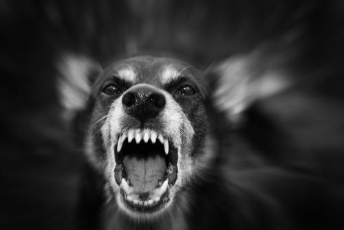 Motivos por los que un perro puede volverse agresivo